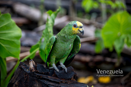 2018-07-06 Venezuela POW (36) 9C2A0220.jpg