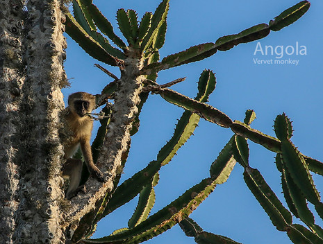 2018-05-20 Angola (POW) 58 9C2A3802.jpg