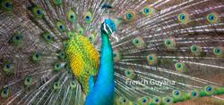 2019-05-17 French Guyana POW (56) long 4
