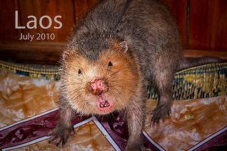 2010-07 Laos POW (43)  1 416.jpg