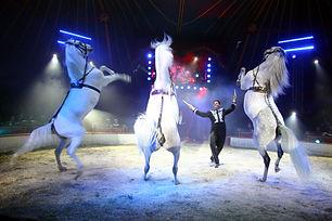 Circus-Knie-Pferde-1.jpg