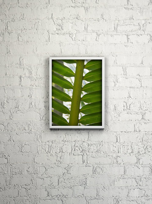 Single Palm Frond Spine Picture Framed