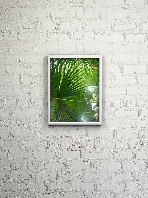 Fan Palm Canopy Effect Framed