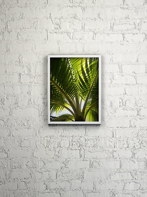 Young Palm Tree Framed
