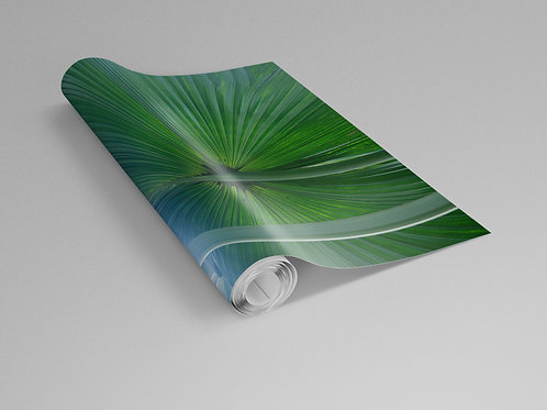Fan Palm Single Leaf Wall Paper