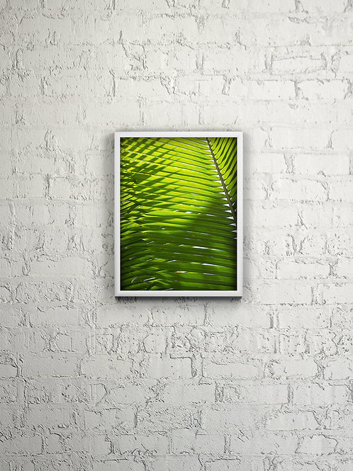 Interlocking Palm Fronds Framed