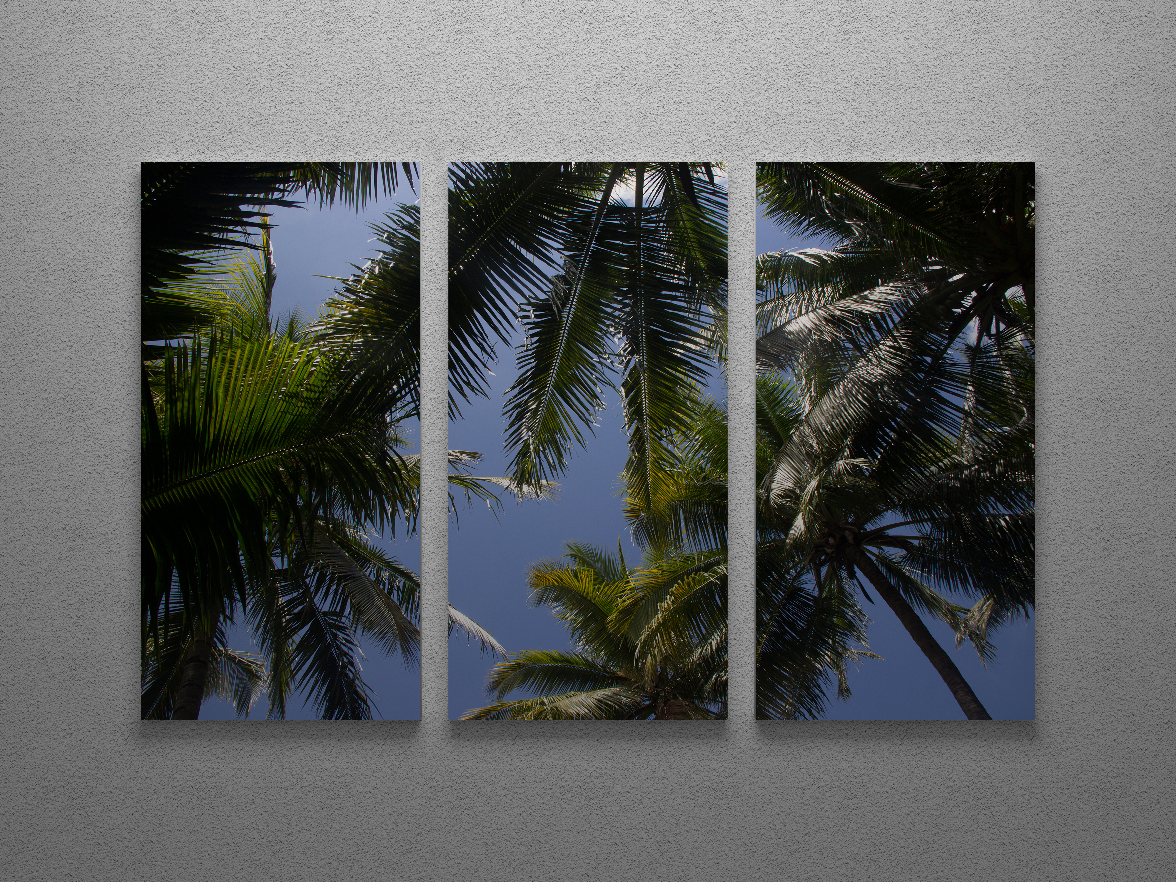 Coconuts Arial Triptych Wall Art