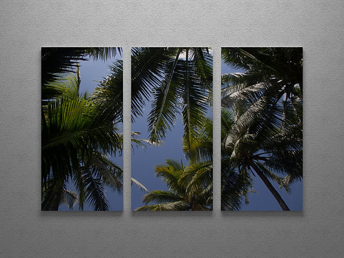 Arial Coconuts Triptych Wall Art