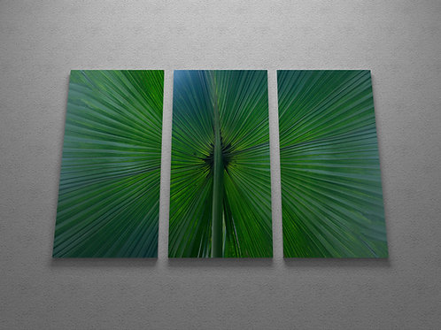 Single Fan Palm Wall Art Triptych