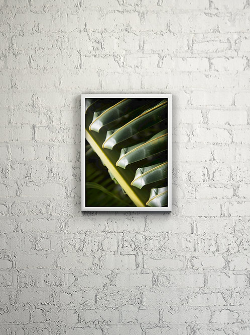 Palm Frond Close Up Framed