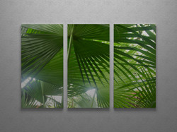 Fan palm canopy triptych