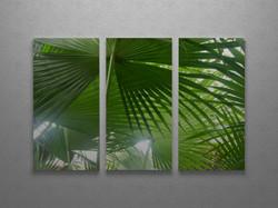 Fan palm canopy triptych
