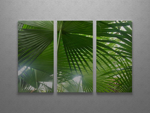 Fan Palm Canopy Wall Art Triptych