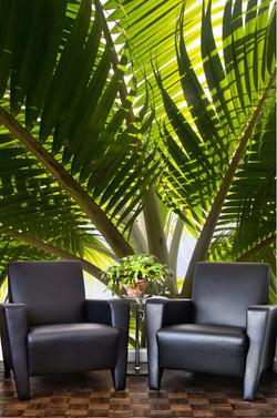 Palm tree designer bespokewall paper