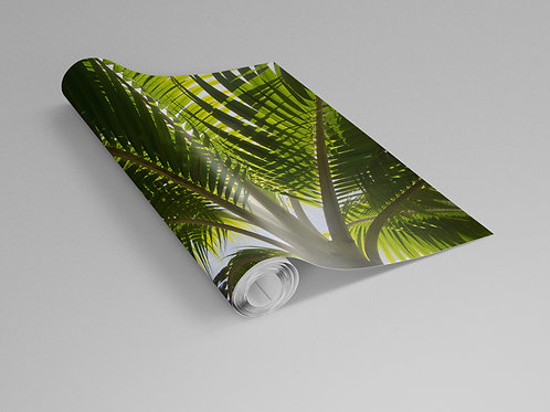 Single Palm Tree Wall Paper