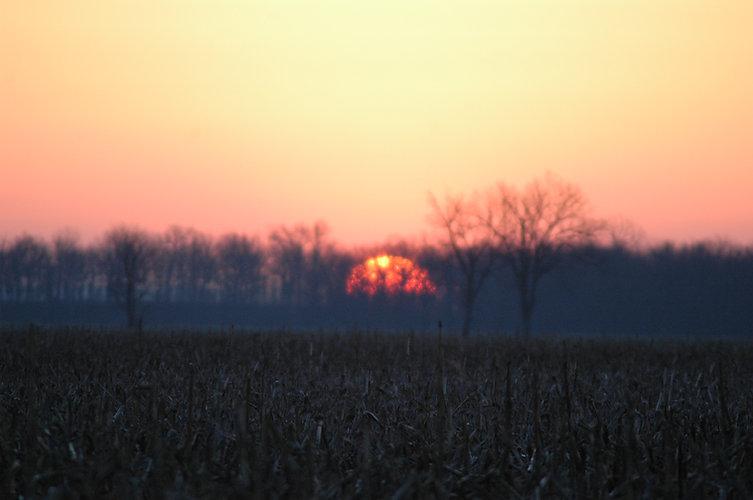Sunrise over the wetland.jpg