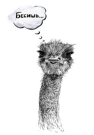 Ostrich. Print