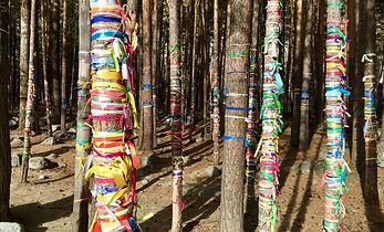 лес в Аршане возле источника