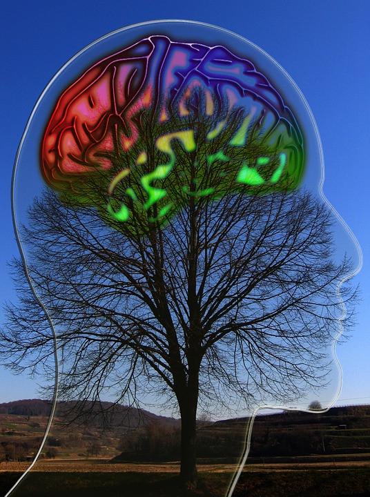 Descubriendo nuestras inteligencias.
