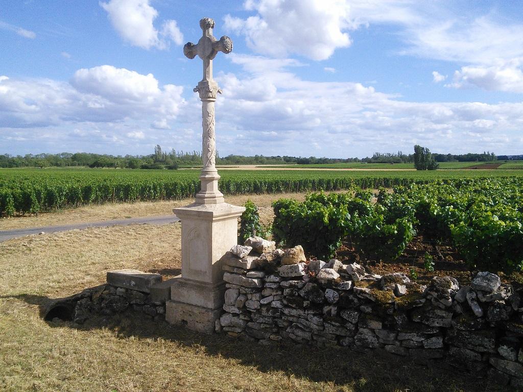 Entre Meursault et Puligny