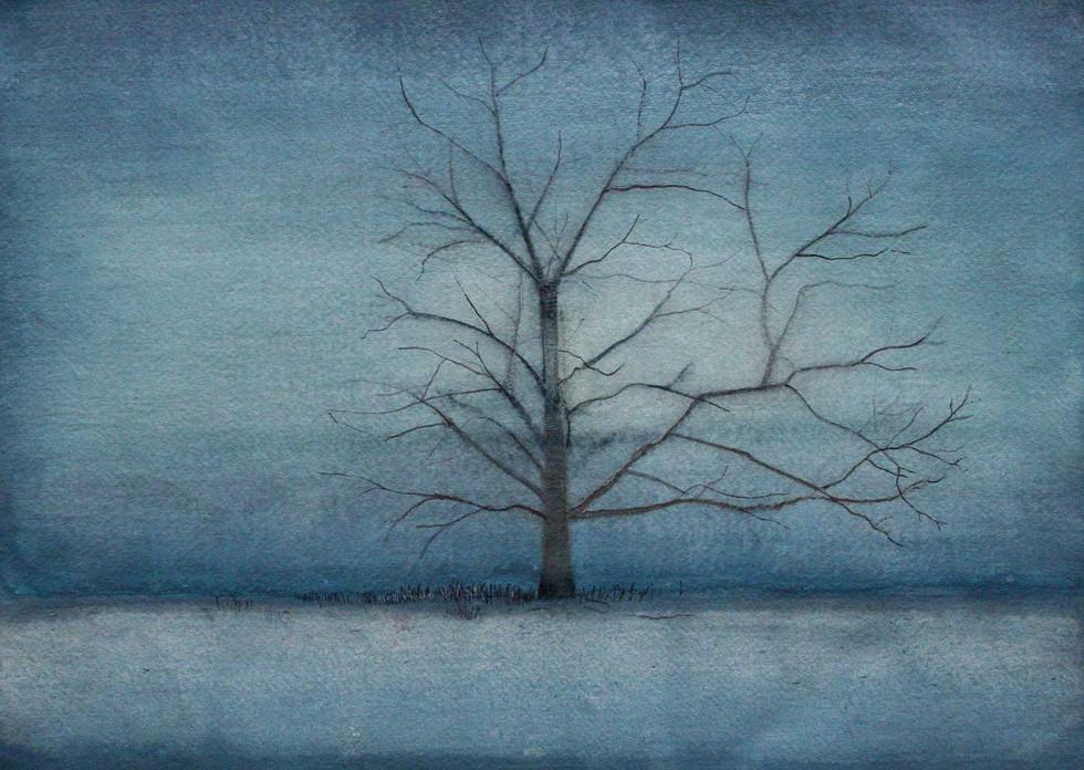 Beech Tree in the Mist at Dusk by Thomas Lamb