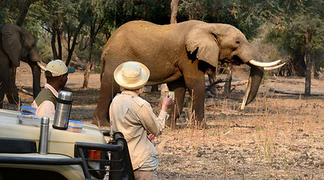 Africa_Safari.jpg