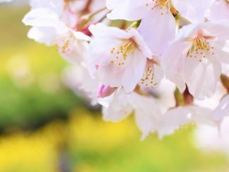 春に増える「メンタル疲れ」予防法!