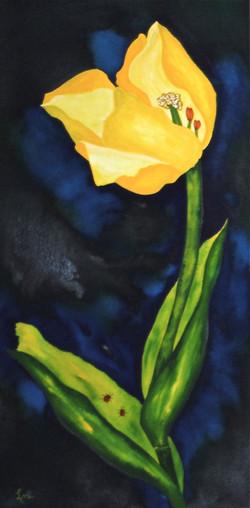 Tulip II Dos Amigos