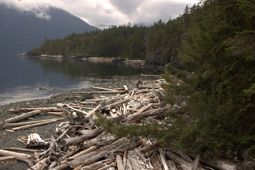 driftwood on a Vancouver Island beach