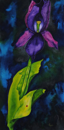 Tulip 1 Solo Amigo