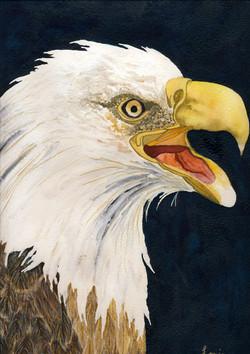 Final Warning - Bald Eagle