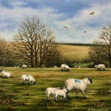 Spring near Brecon