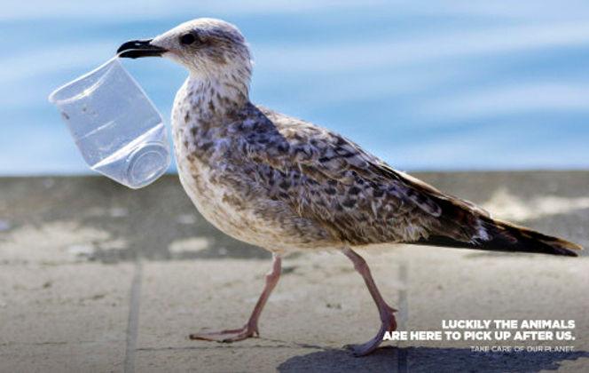 Gull with trash cup .jpg