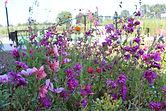 De Nerflander bloemenpluktuin