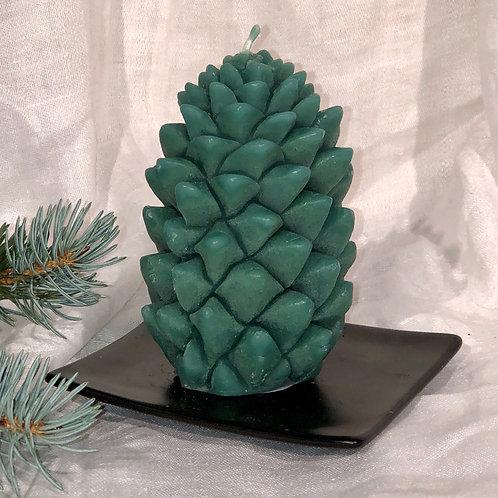 Blue Spruce PNW Pinecone