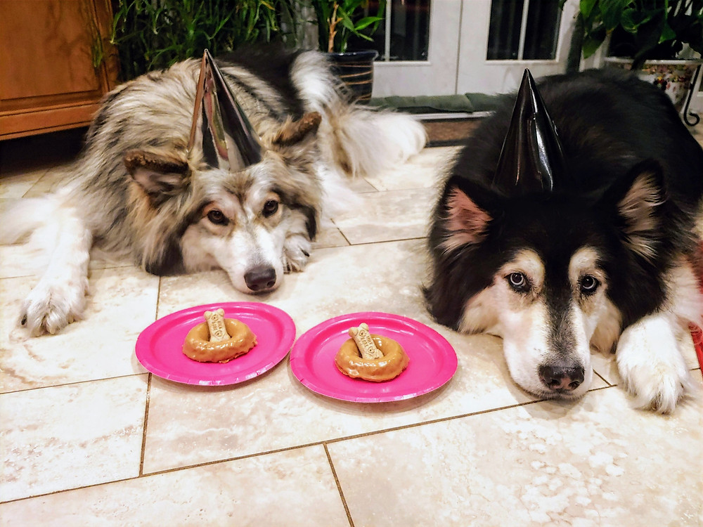 Dogs waiting patiently for Sweet Potato Apple Doggie Donuts with Peanut Butter Glaze