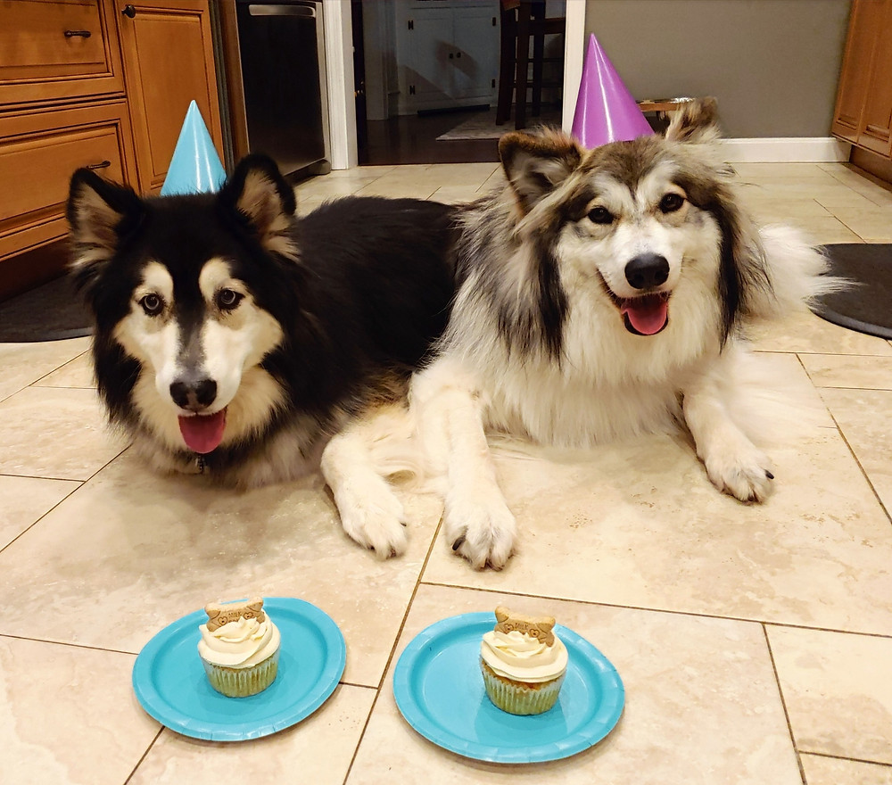 Two dogs excited to try the Apple Cheddar Pupcakes
