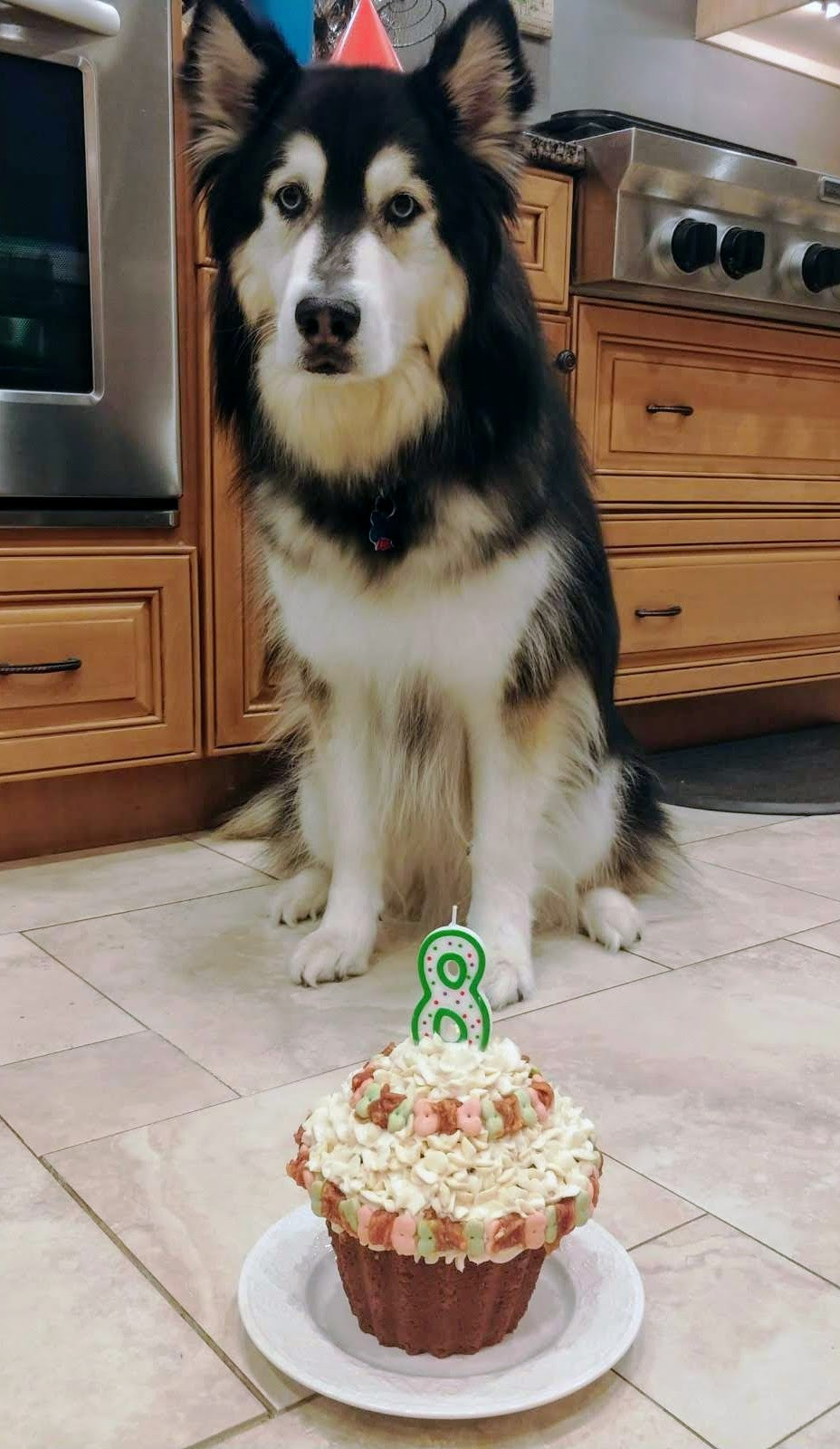 Birthday Dog Waiting Patiently for his Peanut Butter Banana Pupcake