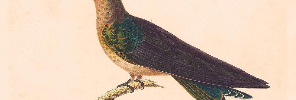 Fugle: PATAGON