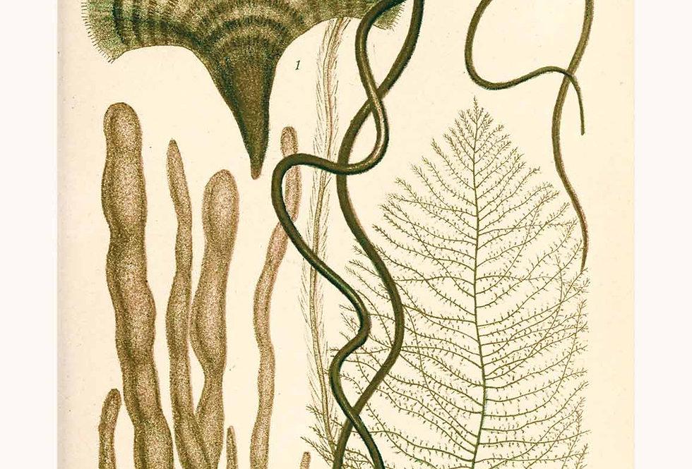 Murrays Seaweed: Green No. B