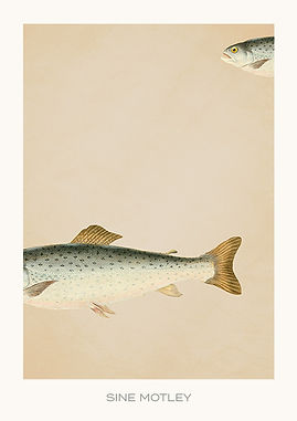 A5 kort FISK NR 4 WEB.jpg