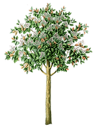 træ_dekorativt.png