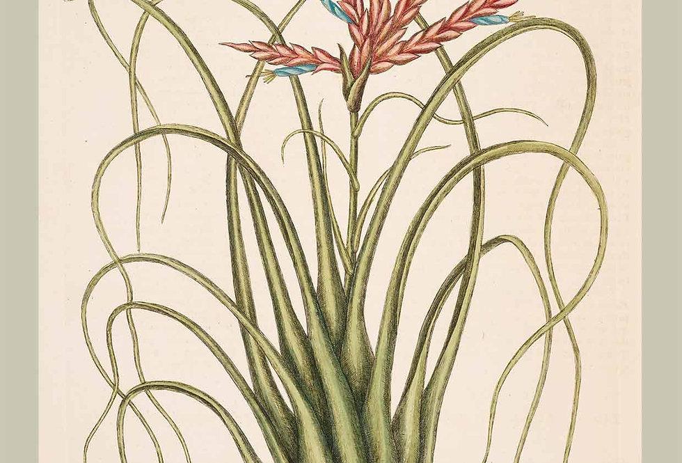 Botanik Serie Lyse Farver Nr. 6