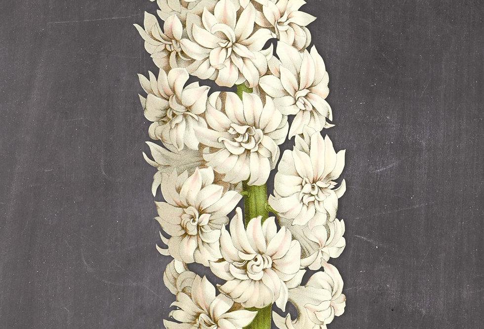 Blomster med sort baggrund: No. 1