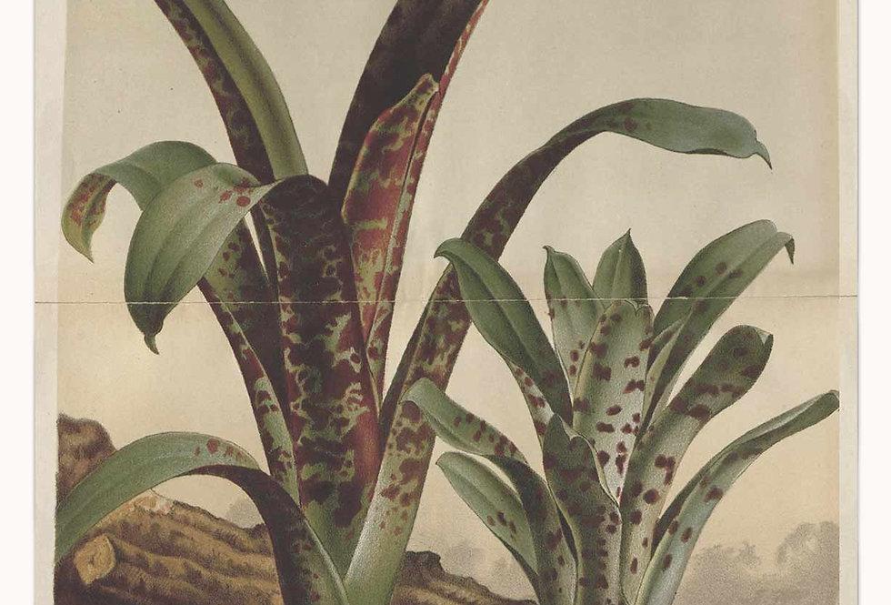 Grønne Eksotiske Planter Nr. 8