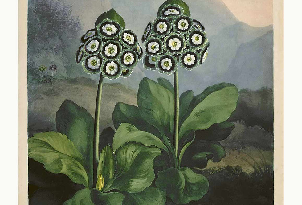 BOTANIK SERIE 1807 Nr. 14