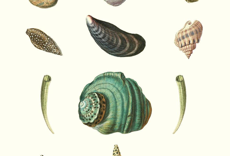 Shells: GRØN