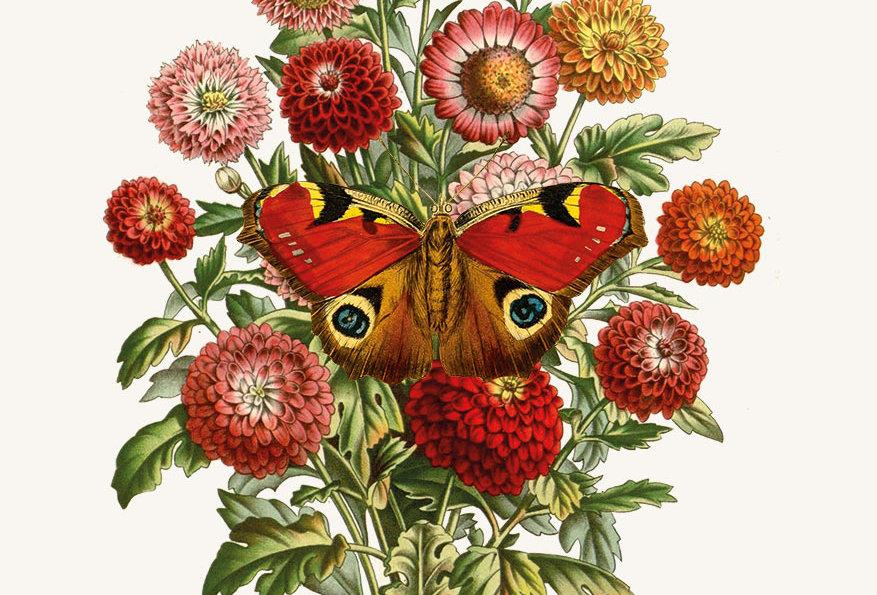 Blomster & Sommerfugle: No. 1