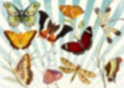 freebie sommerfugle.jpg