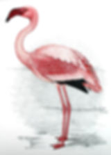Flamingo original.jpg